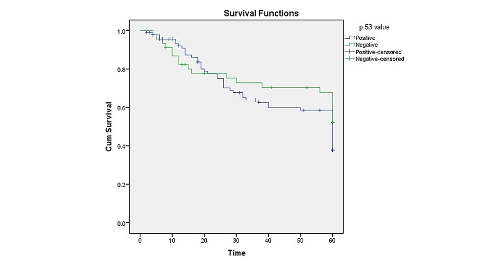 Kaplan-Meier-curve-depicting-five-year-survival-of-p53-positive-and-negative-oral-squamous-cell-carcinoma-(OSCC)-patients.