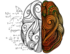 Secondary channel logo 1572632770 logo