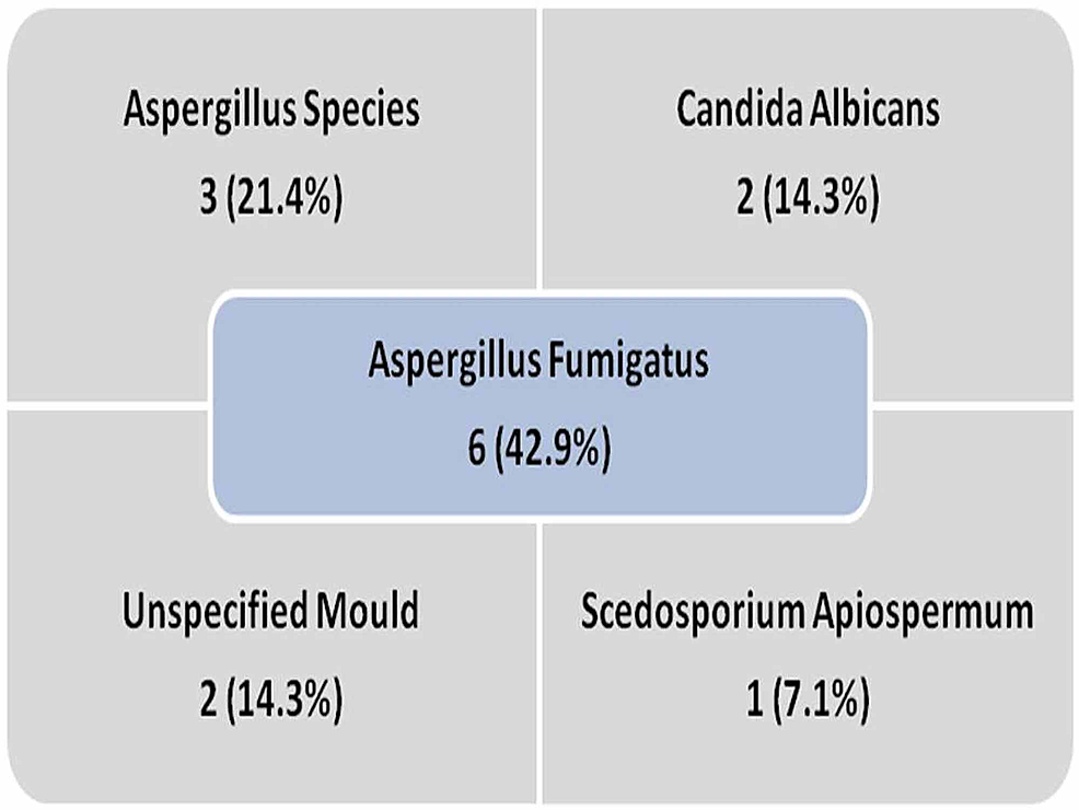 Results-of-fungal-culture