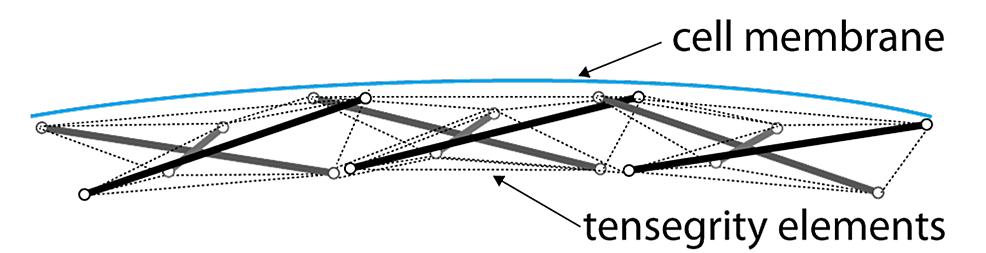 Schematic-representation-of-the-cortex