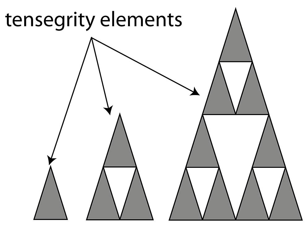 How-tensegrity-elements-maintain-function-whilst-jumping-scale