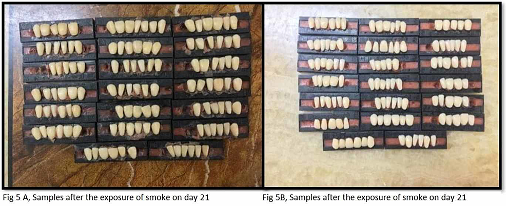 Samples-after-exposure-to-smoke-on-day-21-(groups-A-and-B)
