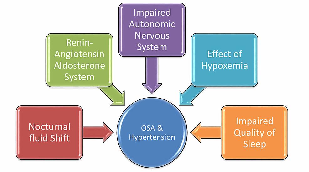 Factors-relating-hypertension-and-obstructive-sleep-apnea-(OSA)