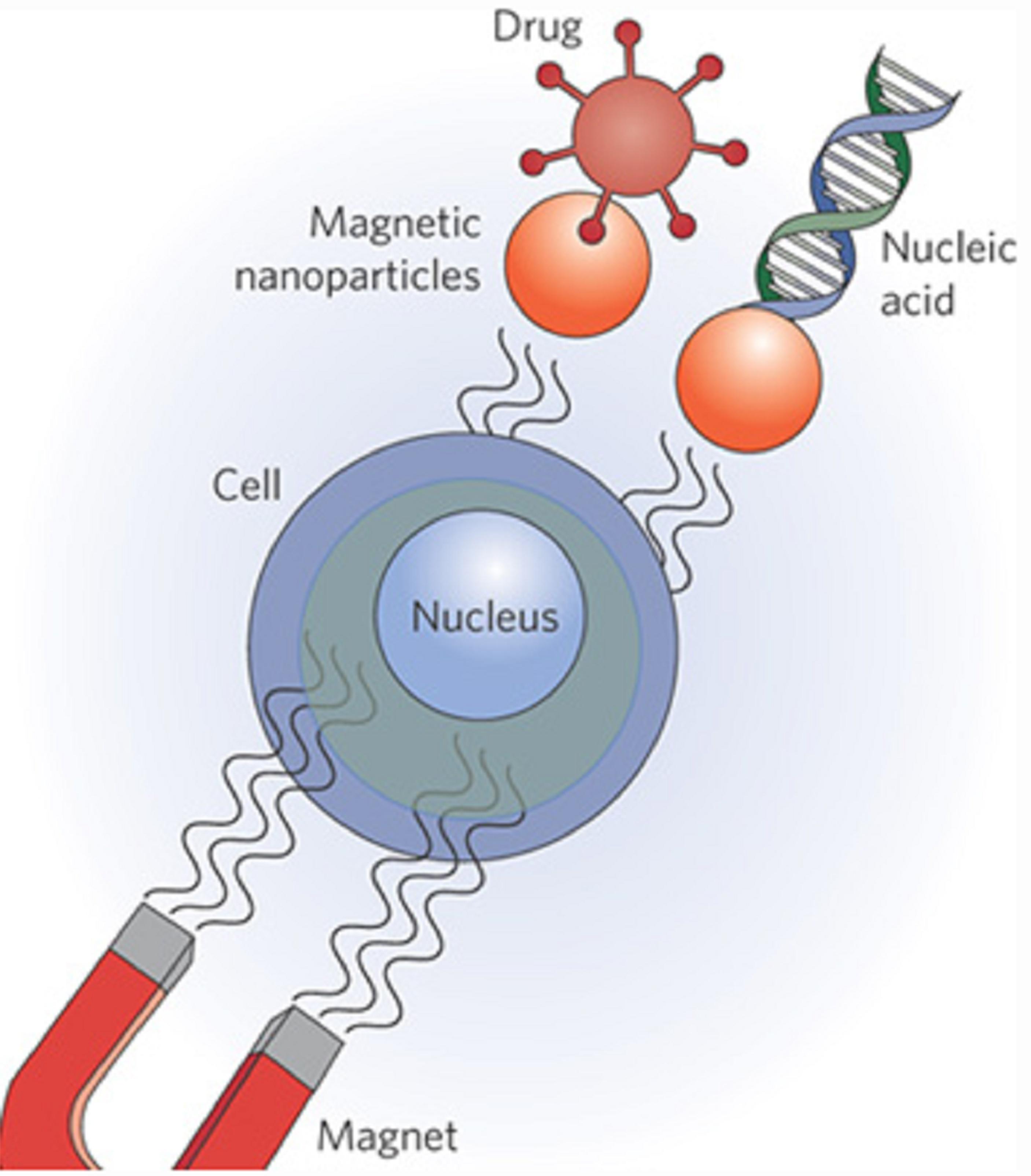 Magnetic Drug Targetting