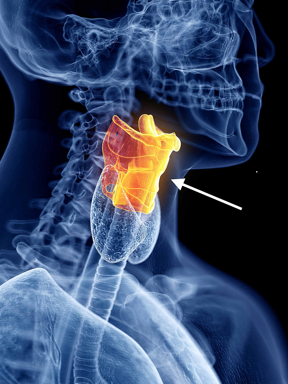 Digital-rendering-of-the-larynx