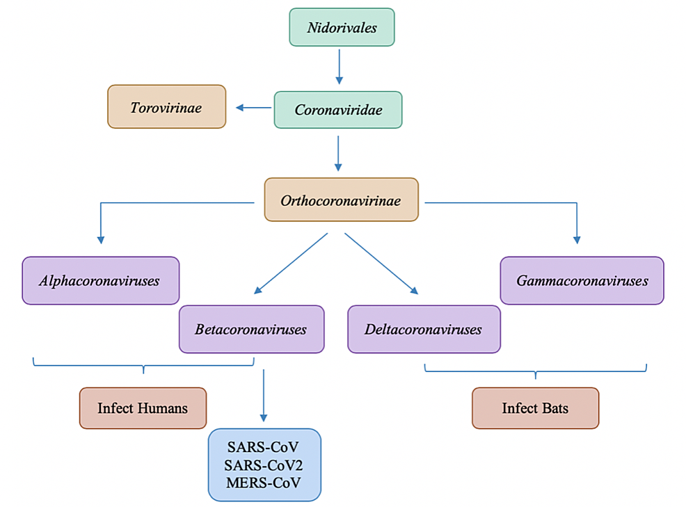 Differentiation-of-Coronaviruses-within-Nidorivales-lineage