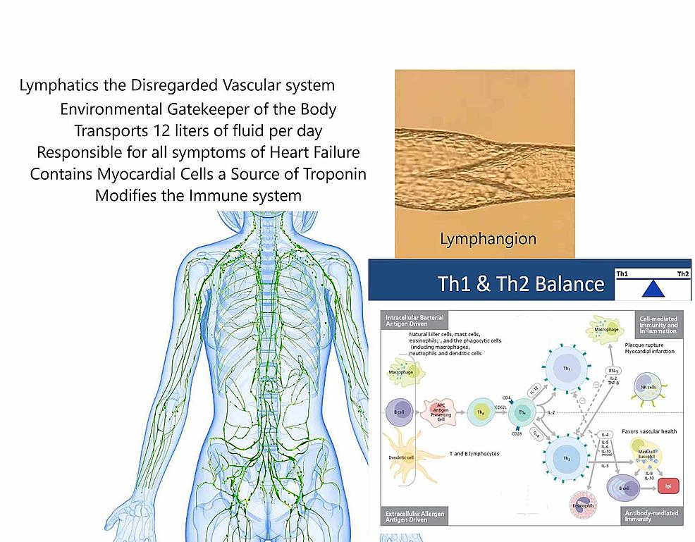 Central-Illustration:The-Forgotten-Vascular-System-–-Lymphatics