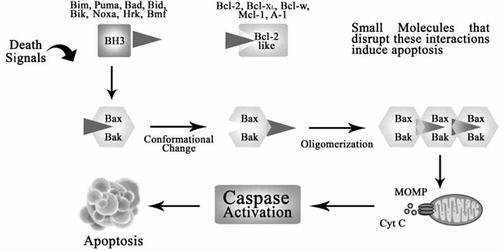 --Regulation-of-apoptosis-by-BCL-2-family