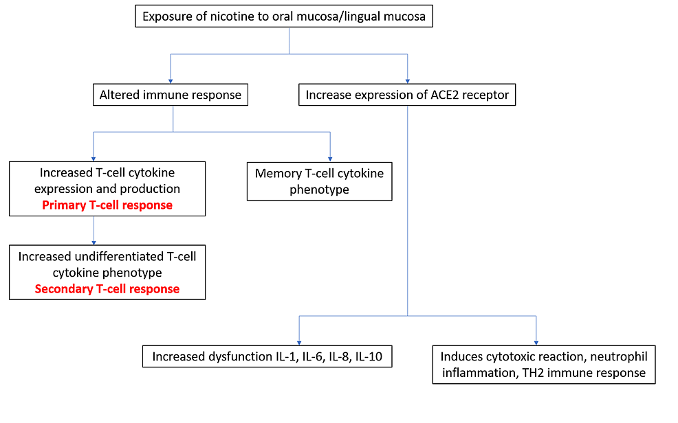Smokeless-tobacco-habitués:-comorbidity-due-to-an-altered-immune-response-