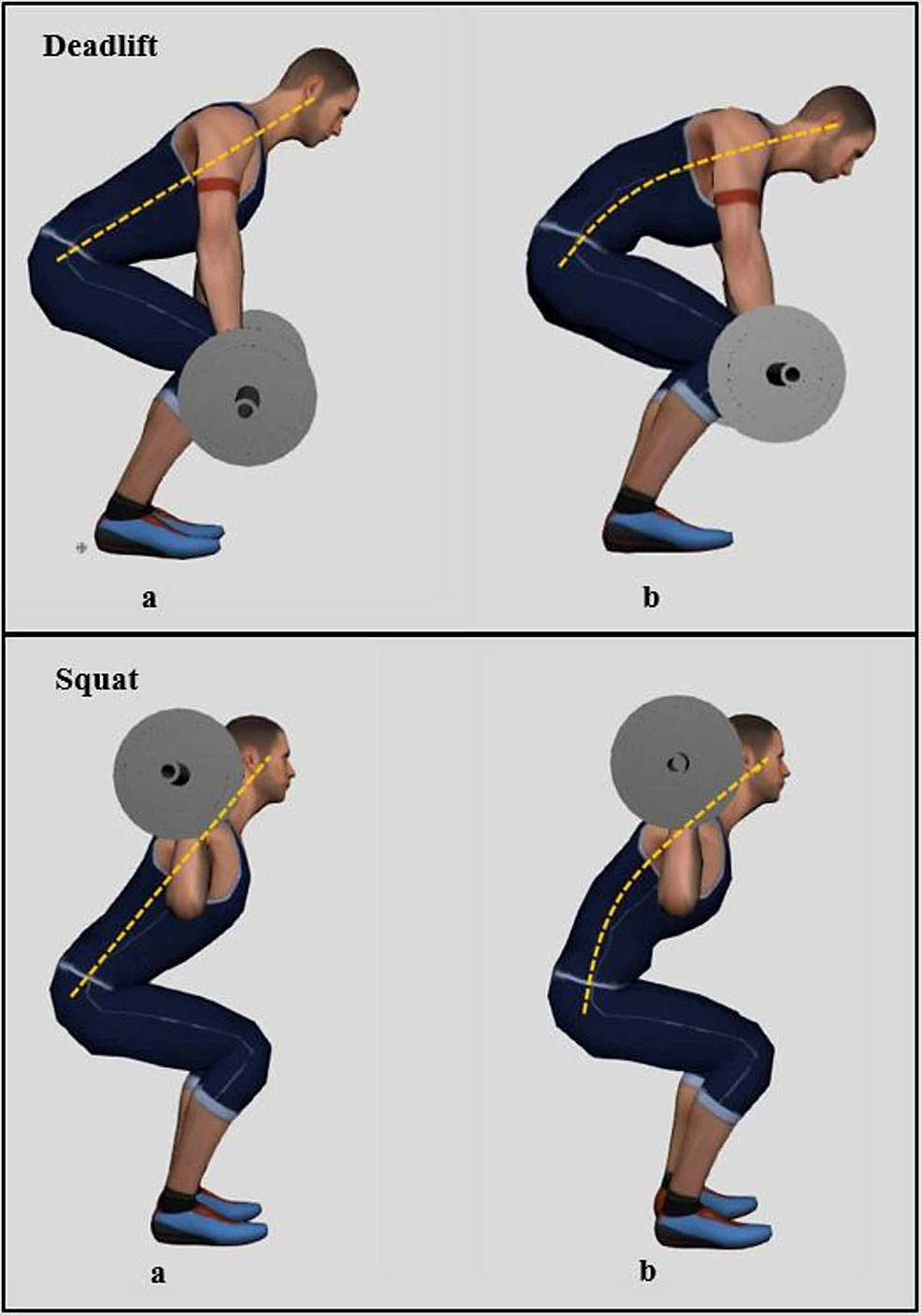 Figure-showing-the-proper-and-improper-execution-of-deadlifts-and-squats.-During-the-deadlift,-the-athlete-lifts-the-bar-until-legs-get-locked-and-the-lifter's-posture-is-straight-(Deadlift-a),-and-during-the-squat,-the-athlete-removes-the-bar-from-the-rack-and-lowers-the-body-until-the-hip-joint-gets-lower-than-the-knees-(Squat-a).-Improper-execution-of-these-movements-may-compromise-proper-body-posture-and-lead-to-body-tilt-and-back-flexion-as-seen-in-(Deadlift-b-and-Squat-b).-As-the-body-is-tilted-forward,-the-effects-of-the-loads-lifted-increase-dramatically-and-injury-risk-rises.