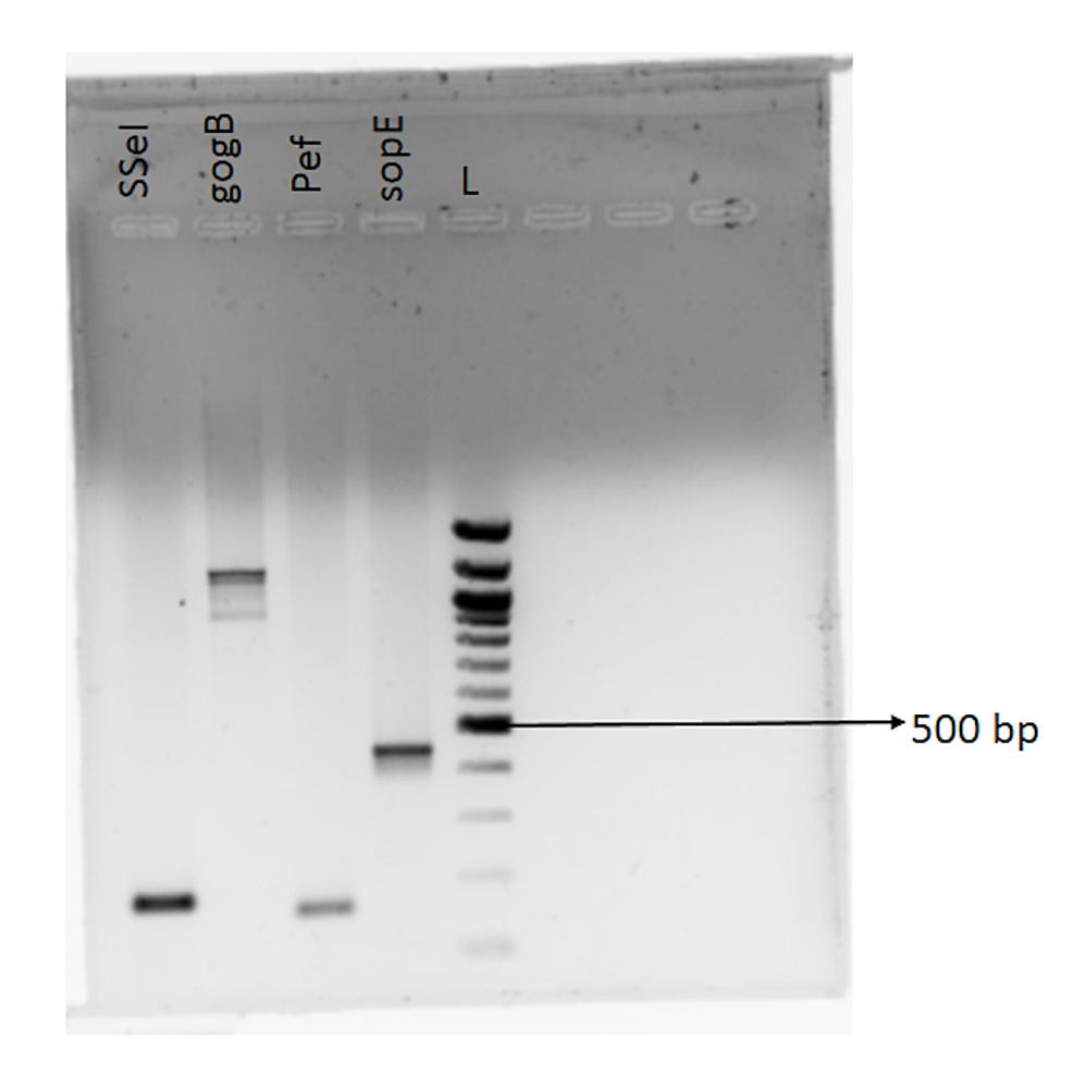 Amplified-PCR-products