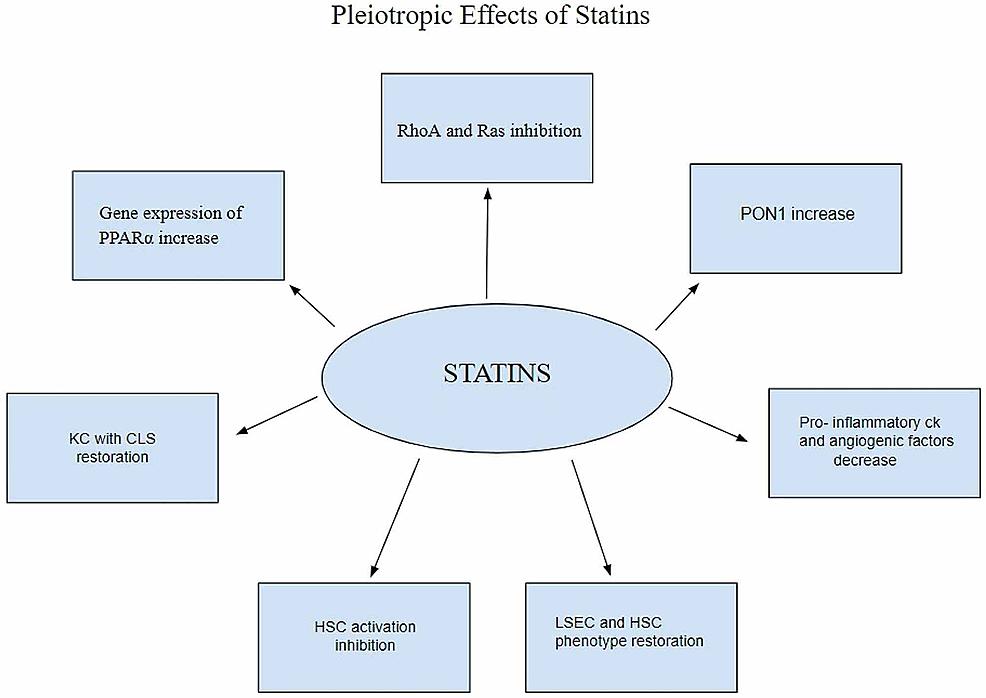 Pleiotropic-effects-of-statins