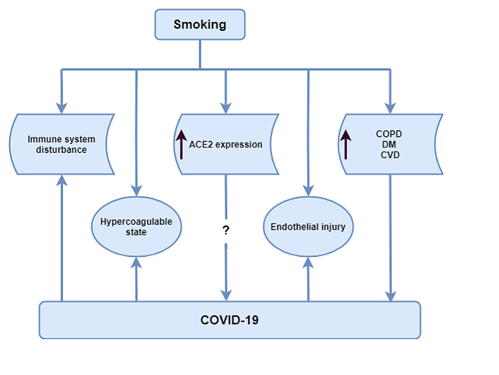 Mechanisms-that-might-explain-the-higher-mortality-rate-among-smokers-with-COVID-19-infection-compared-to-non-smokers.