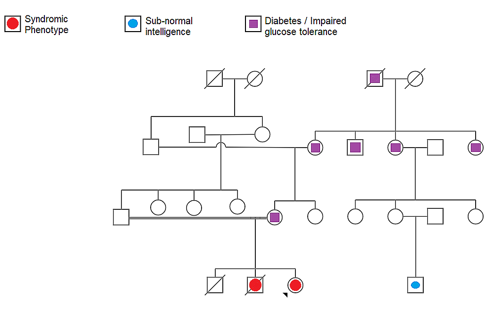 The-pedigree-chart-showing-the-occurrence-of-the-phenotype-in-the-family