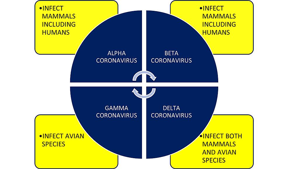 The-coronavirus-genera-and-host-preferences