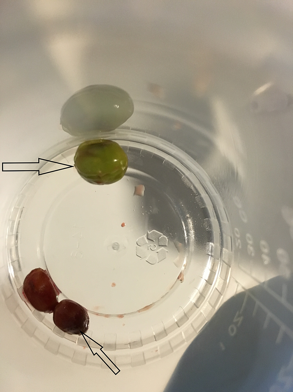 The-removed-green-peas-(top-arrow)-and-pomegranate-seeds-(bottom-arrow)