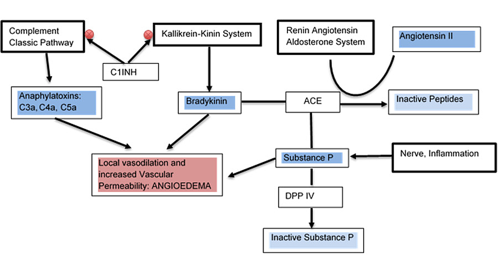 Interaction-of-kallikrein-kiting-system-(KKS),-renin-angiotensin-aldosterone-system-(RAAS)-and-complement-system-in-the-development-of-angioedema