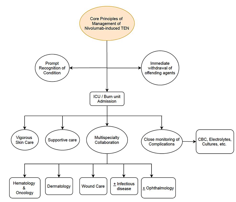 Core-principles-of-the-management-of-nivolumab-induced-toxic-epidermal-necrolysis.