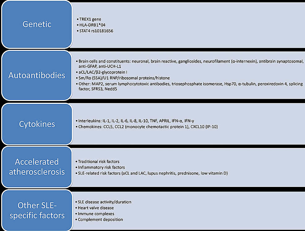 Factors-involved-in-the-pathogenesis-of-neuropsychiatric-SLE