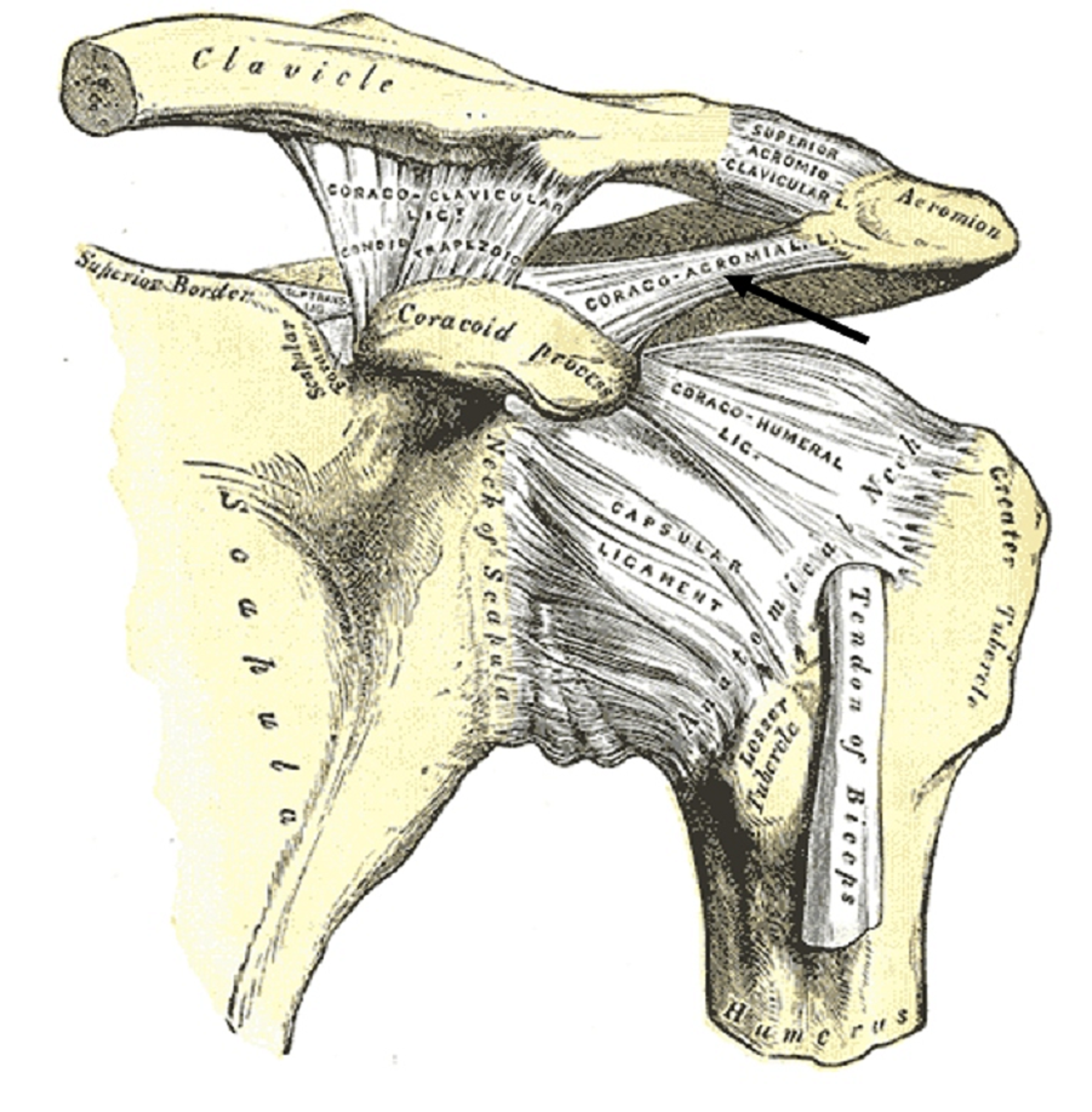 """Cureus 