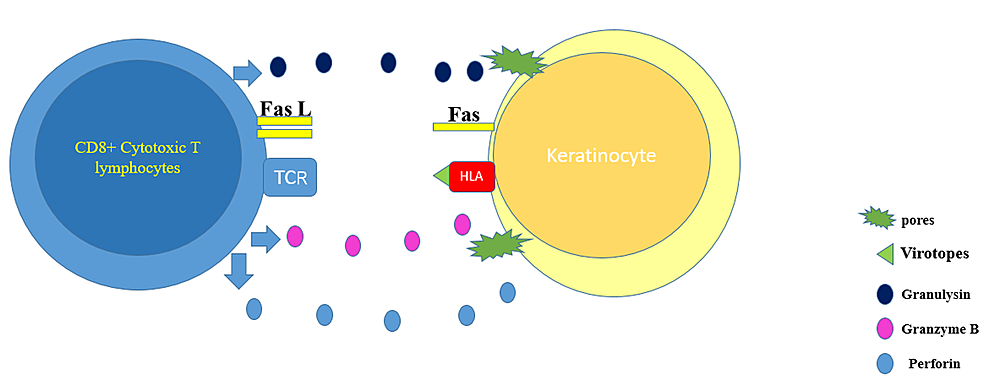 The-graph-depicts-the-pathogenesis-behind-virotopes-antigen-in-the-COVID-19-vaccine