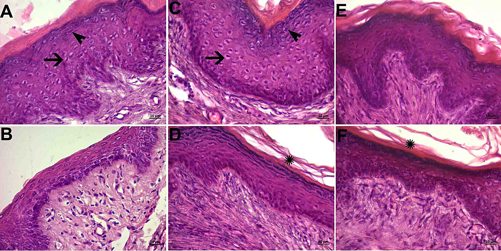 Histopathological-examination-of-the-mucous-layer