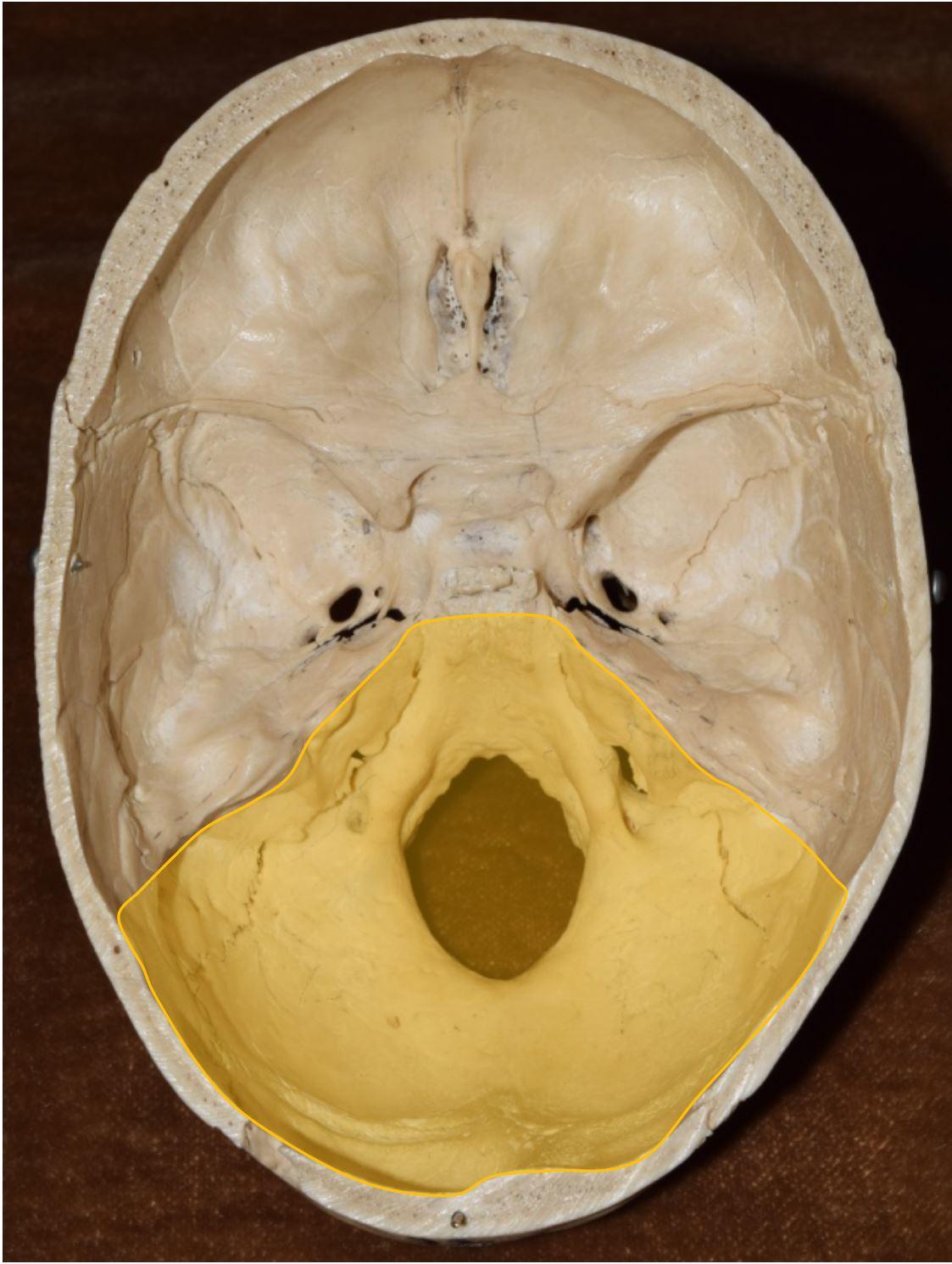 Cureus | Cranial Nerve Foramina: Part II – A Review of the Anatomy ...