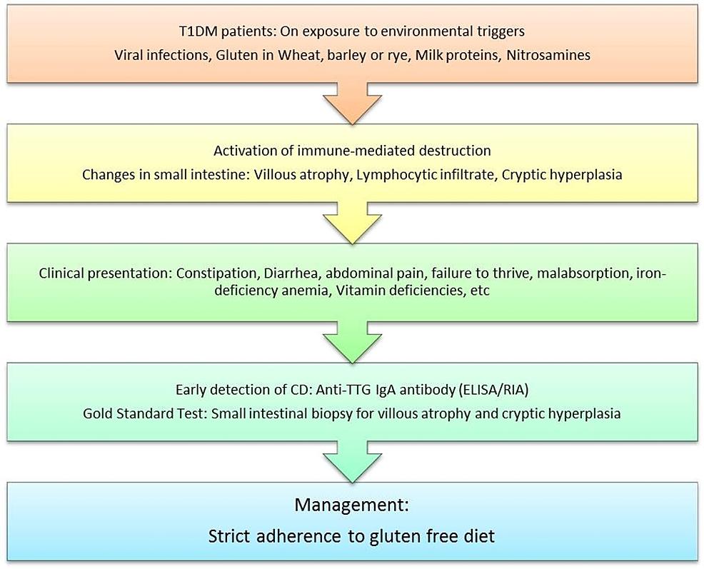 The-proposed-pathogenesis,-screening-methods,-and-management-protocol-for-celiac-disease-in-diabetes-mellitus