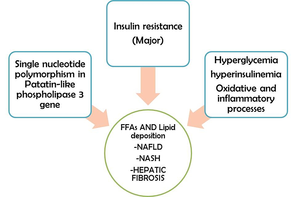 The-underlying-multifactorial-pathogenesis-of-non-alcoholic-fatty-liver-disease-in-diabetes