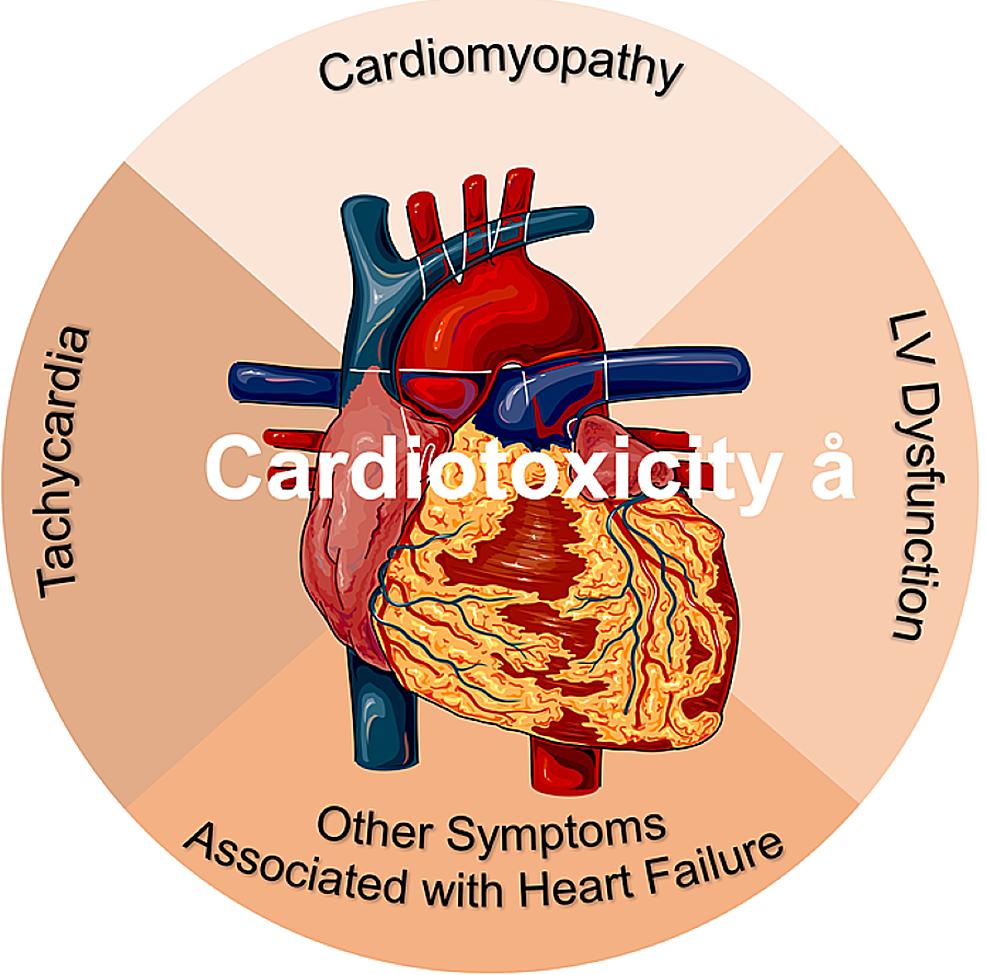 Cardiotoxicity.