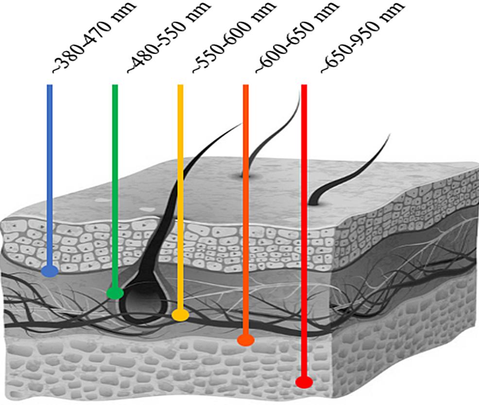 Depth-of-light-penetration-per-wavelength