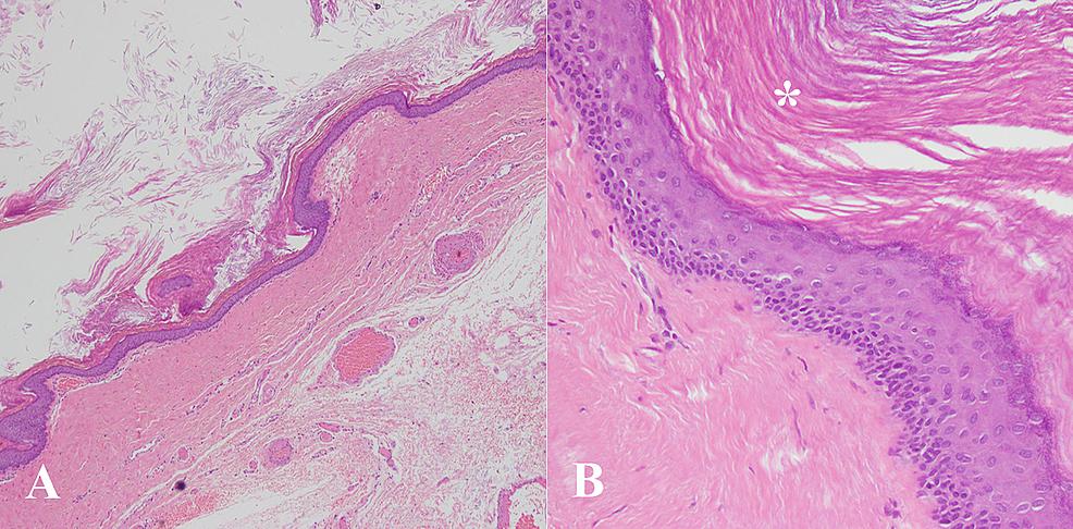 A-&-B:-Histology-slides