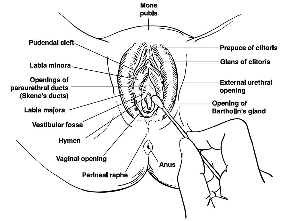 Vaginal-cotton-swab-examination