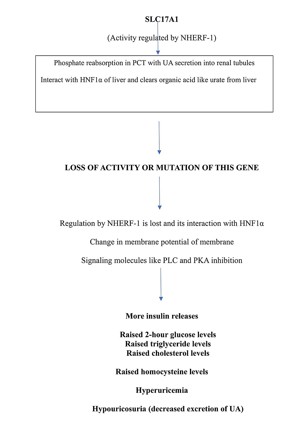 Flow-chart-showing-functions-of-SLC17A1-gene-and-consequences-of-its-mutation.