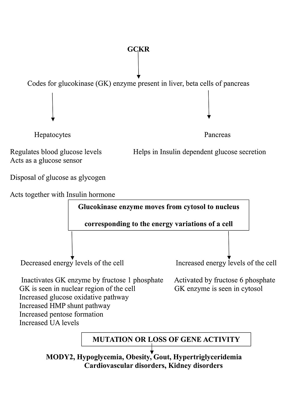Flow-chart-showing-GCKR-gene-function-and-the-consequences-of-its-mutation.