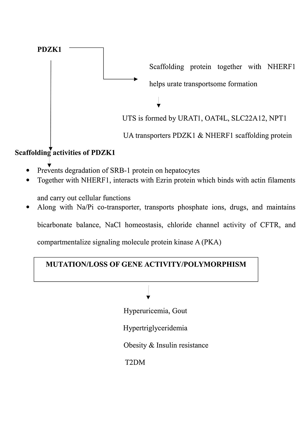 Flow-chart-showing-function-of-the-gene-PDZK1-and-the-consequences-of-its-mutation.