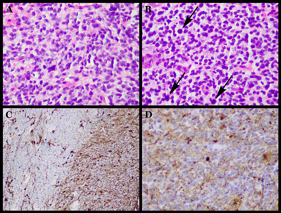 Histological-results-of-pathology-studies.
