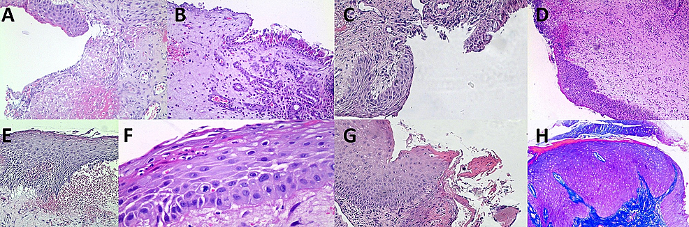 Spectrum-of-histological-changes-in-the-mucosal-lining.