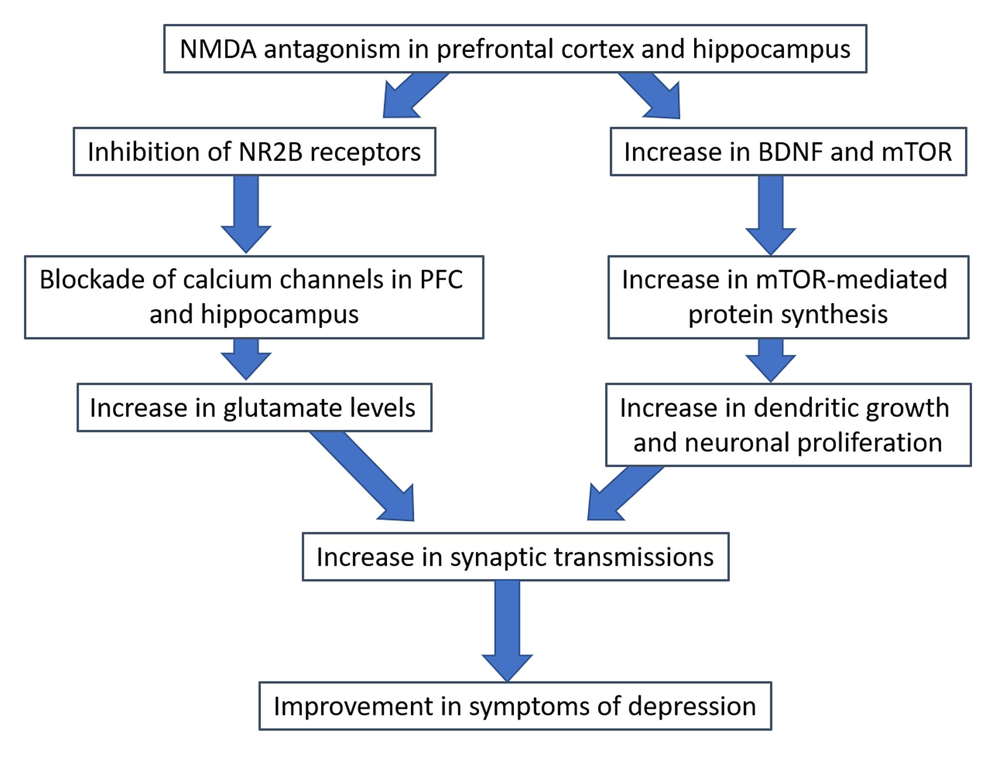 Cureus | A Review of the Mechanism of Antagonism of N-methyl