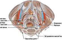 Article box 238d3e006db411e886fadd70bfe0e7ad fig. 1 cardinal ligament