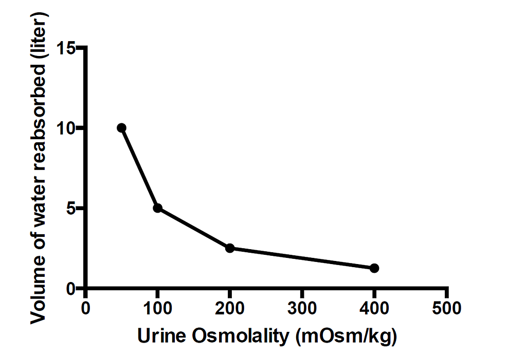 Volume-of-water-reabsorbed-in-the-cortical-collecting-duct-estimated-to-double-urine-osmolality.