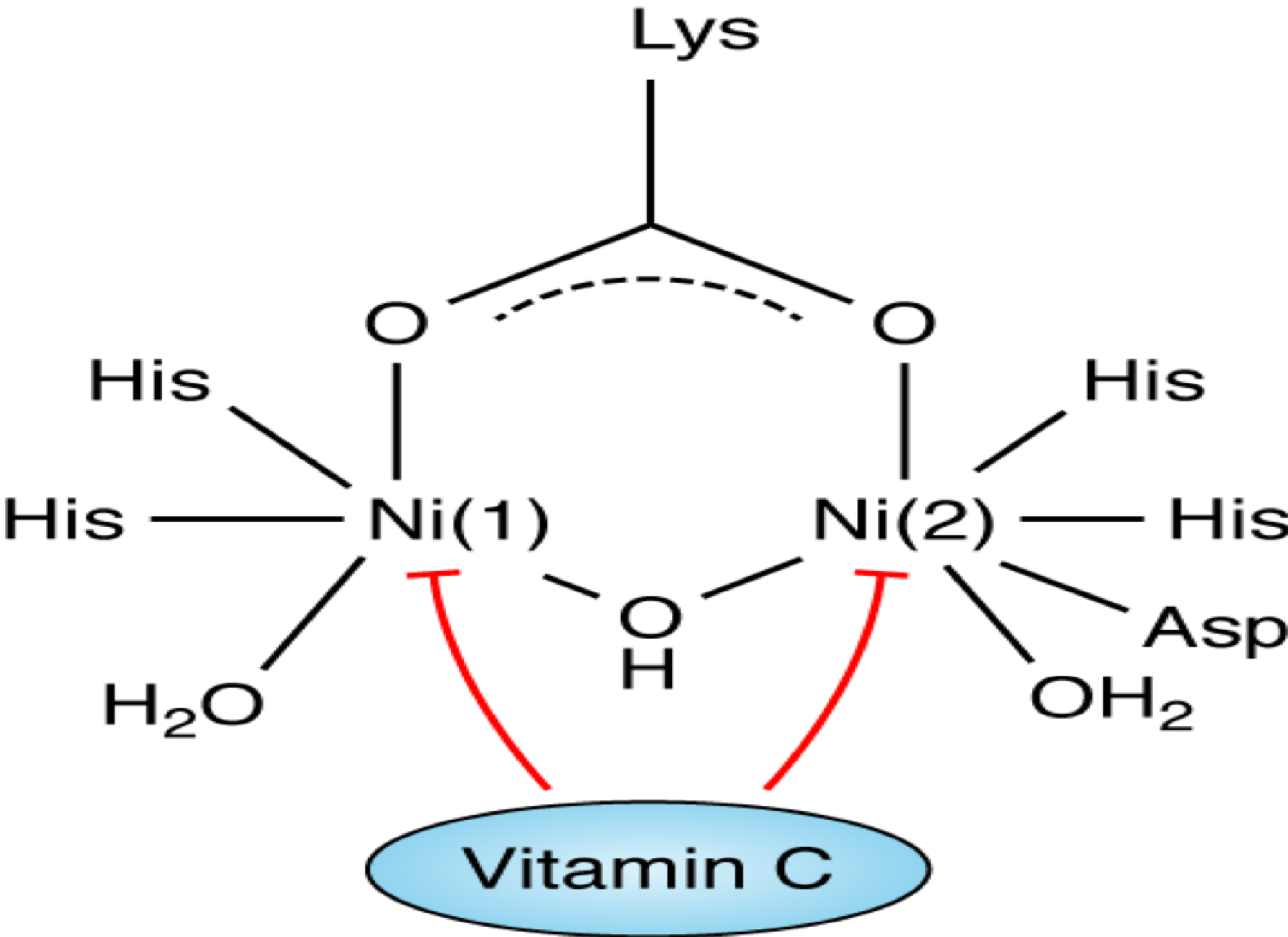 Vitamins and Hormones: Advances in Research and Applications: 51