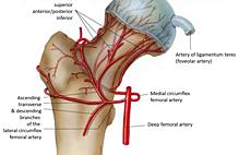 Article box 1052b71082c311e8a91e8dec86298ec4 4765 124 131 femoral head artery formatted v1 pme