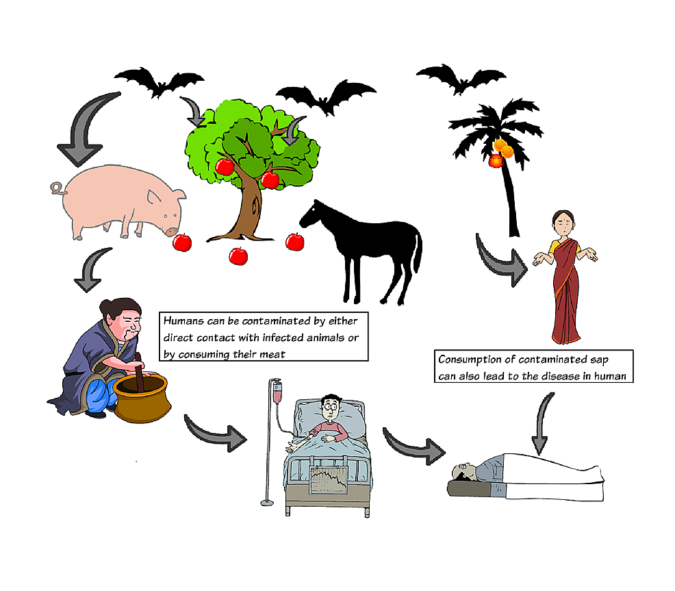 Pictorial-description-of-different-means-of-transmission-of-Nipah-virus.