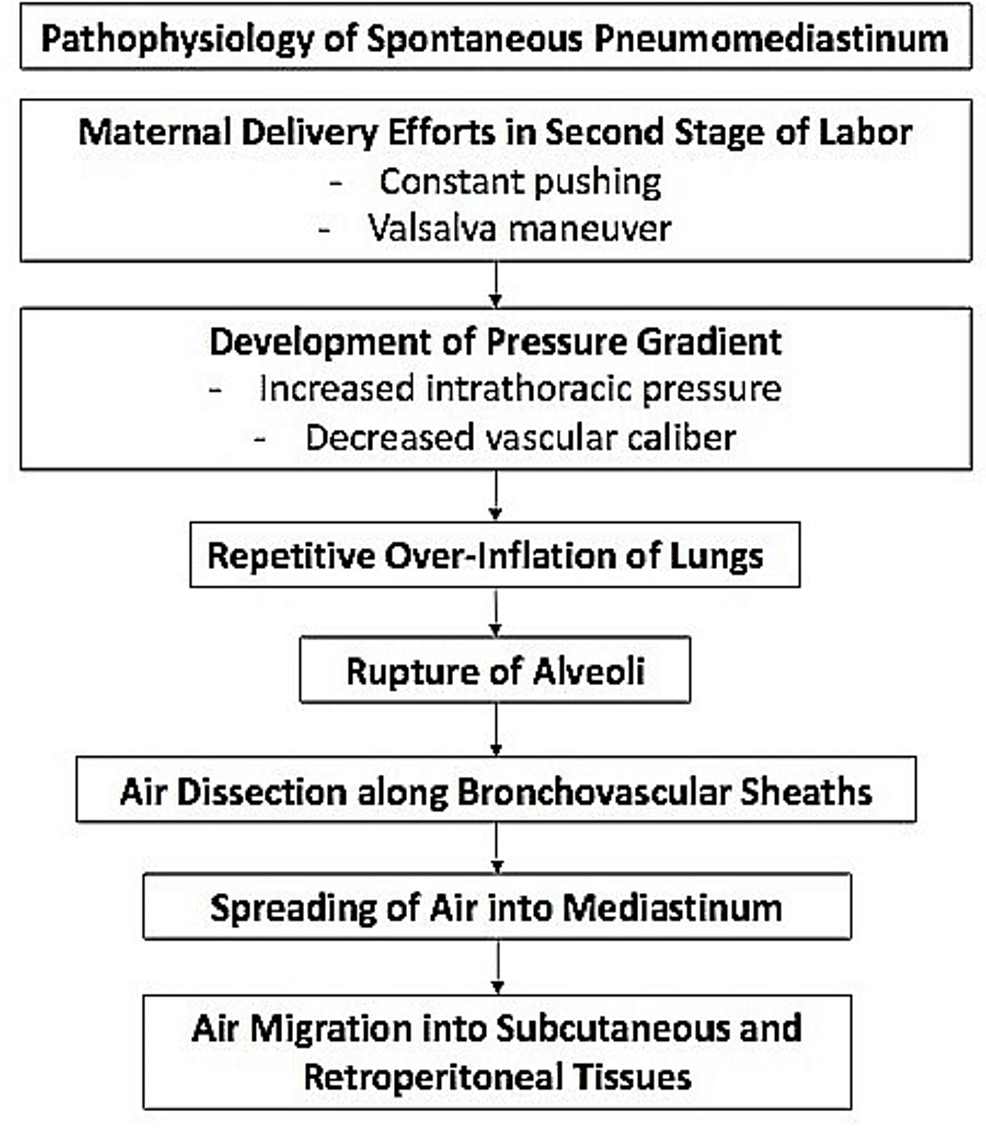 The-proposed-pathophysiologic-process-of-spontaneous-pneumomediastinum-in-pregnancy