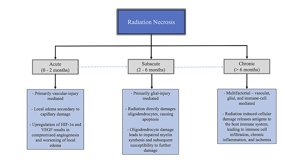 Tree-diagram-showing-the-stages-of-radiation-necrosis-with-key-features