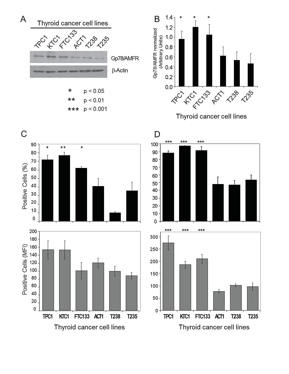 Gp78/AMFR-expression-and-AMF-FITC-internalization-in-human-thyroid-cancer-cells