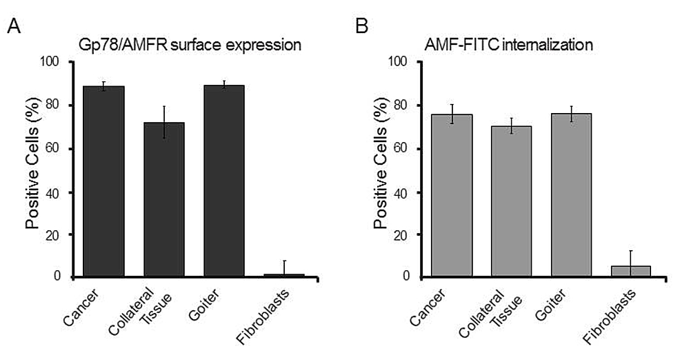 --Gp78/AMFR-surface-expression-and-AMF-internalization-in-clones-derived-from-spheroid-like-thyroid-cultures