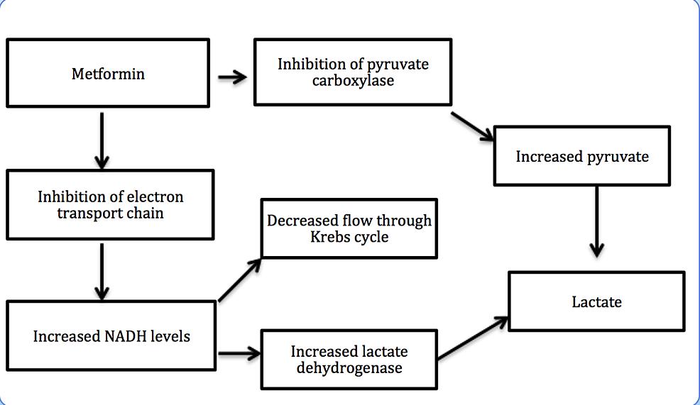 Mechanism-of-metformin-associated-lactic-acidosis-(MALA)