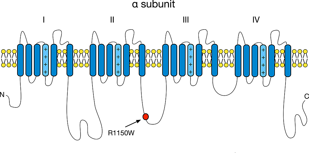 Nav1.7-alpha-subunit-structure-showing-the-location-of-amino-acid-affected-by-investigated-common-polymorphism-rs6746030-is-marked-with-the-arrow